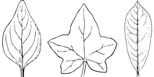 How To Make Simple Three Dimensional Fabric Leaf Embellishments
