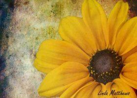 From PhotoArt to PhotoArt Paintings
