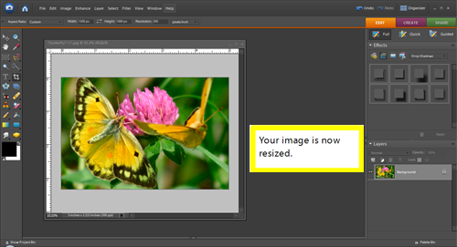 How to resize and image in Photoshop Elements