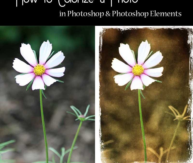 How to Colorize a Photo in Photoshop & Photoshop Elements