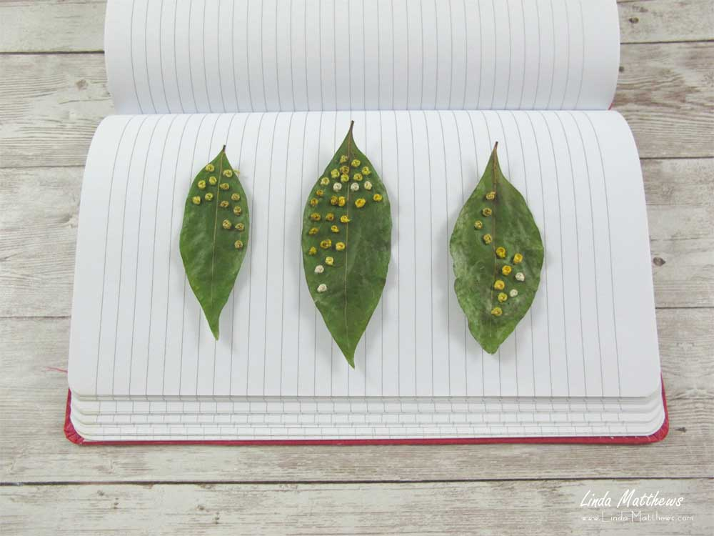 Tips for Sewing on Leaves